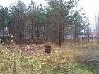 Уникальное изображение Разные услуги Расчистка участков от кустарника и подлеска 39046147 в Петрозаводске