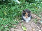 Уникальное изображение Отдам даром - приму в дар Три маленьких котенка в добрые руки 33454671 в Подольске