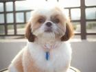 Скачать foto Услуги для животных Стрижка собак, Щербинка, Выезд мастера на дом 66540911 в Щербинке