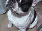 Скачать бесплатно изображение Продажа собак, щенков Ищем невесту! 38938534 в Пскове