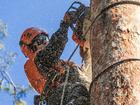 Увидеть фотографию  Удаление и кронирование деревьев в Пушкино 37656418 в Пушкино