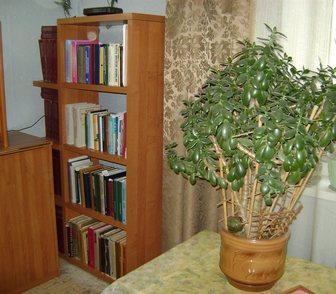 Фотография в Мебель и интерьер Мебель для гостиной Срочно продается стеллаж для книг. в Пыть-Яхе 500