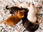 Новое фотографию Отдам даром Домашние котята в хорошие руки 33819432 в Раменском