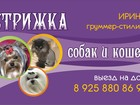Фотография в Собаки и щенки Стрижка собак Стрижка и триминг собак всех пород от йорка в Раменском 0