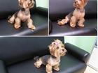 Изображение в Собаки и щенки Стрижка собак Наш ЗооЦентр предлагает все виды услуг для в Реутове 100