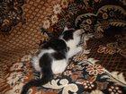 Новое фотографию Отдам даром Отдам котёнка в добрые руки, 32869578 в Рязани