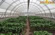 Дистанционно-очный курс по овощеводству,