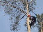 Скачать foto  Спил и вывоз деревьев 32489813 в Аксае