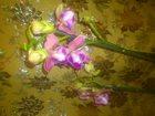Уникальное изображение Растения орхидеи фаленопсис 34034693 в Ростове-на-Дону