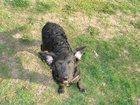 Изображение в Собаки и щенки Продажа собак, щенков Этот замечательный щенок был найден в январские в Ростове-на-Дону 0