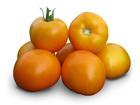 Смотреть изображение Разное Семена желтого томата KS 17 F1 (Китано) 36626838 в Ростове-на-Дону