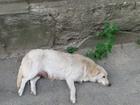 Изображение в Собаки и щенки Продажа собак, щенков Хотим найти дом милым непоседам. Вырастут в Ростове-на-Дону 0