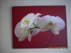 Фотография в   Оригинальный постер с изображением орхидеи в Ростове-на-Дону 1799