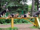 Скачать бесплатно изображение Производство мебели на заказ Дрессировка собак Стелла 37719111 в Ростове-на-Дону