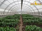 Смотреть foto Курсы, тренинги, семинары Курс Технология выращивания овощных культур в защищённом грунте 38371973 в Ростове-на-Дону