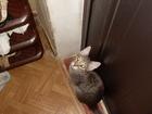 Новое фото  приму в дар для больных животных 40564737 в Ростове-на-Дону