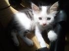 Скачать фото Отдам даром - приму в дар Милые котята в заботливые руки 69527070 в Ростове-на-Дону