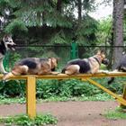 Дрессировка собак Стелла
