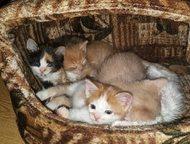 Супер кошки в дар Привет, друзья! эта куча-мала ищет себе домик каждому малышу н