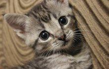 Отдам котят в надежные руки