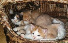 Супер кошки в дар