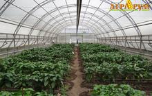 Курс Технология выращивания овощных культур в защищённом грунте