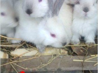 Смотреть изображение  Продаю крольчат, 35269721 в Ростове-на-Дону