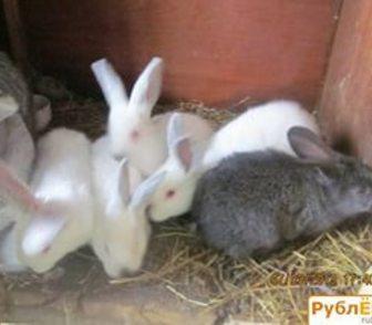 Фотография в   Племенные кролики завозятся из лучших хозяйств. в Ростове-на-Дону 200