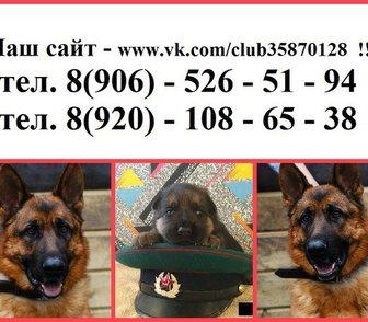 Фотография в Собаки и щенки Продажа собак, щенков Без документов недорого по хорошим минимальным в Рыбинске 0