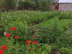 Уникальное фотографию Земельные участки Продам сад огород за п, желанный 56694405 в Салавате