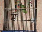 Изображение в Собаки и щенки Продажа собак, щенков ожереловый попугай самец вместе с большой в Тольятти 5000