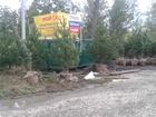 Скачать бесплатно фото Ландшафтный дизайн Хвойные и лиственные крупномеры и саженцы 37381229 в Самаре