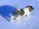 Фото в Собаки и щенки Продажа собак, щенков Девочки американской акиты 2 мес. привитые, в Самаре 15000
