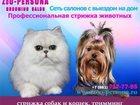 Скачать бесплатно фото Услуги для животных Стрижка и тримминг собак всех пород и кошек с выездом на дом по Санкт-Петербургу, 32738171 в Санкт-Петербурге