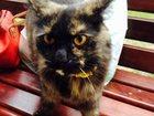 Изображение в Потерянные и Найденные Потерянные ищем хозяина кошки найденой в районе м. Электросила в Санкт-Петербурге 0