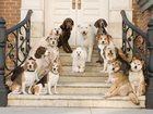 Изображение в   Зоогостиница для собак 7км по Мурманскому в Санкт-Петербурге 400
