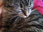 Изображение в Кошки и котята Продажа кошек и котят Отдается в добрые, ответственные и заботливые в Санкт-Петербурге 0