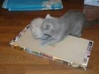 Свежее фотографию Услуги для животных Акция, Когтеточки-лежанки для кошек в С-Петербурге, 34597485 в Санкт-Петербурге
