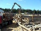 Уникальное foto  Топляк, мореный лес,сосна, елка, пни,коряги, 35075728 в Петрозаводске