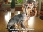 Скачать бесплатно фото  Cтрижка кошек и собак, выезд на дом (Спб) 37682973 в Санкт-Петербурге