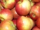 Яблоки оптом в Санкт-Петербурге