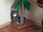 Кошечка желает познакомиться для приятного времяпровождения