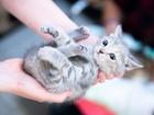 Нежные котята в добрые руки очень трогательные