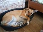Смотреть фото Отдам даром - приму в дар Отличная собака для большой семьи с детьми 68826924 в Санкт-Петербурге