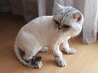 Смотреть изображение Услуги для животных Стрижка собак, Стрижка кошек, Без наркоза, Выезд на дом, 71580993 в Санкт-Петербурге