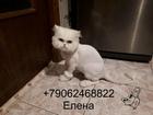 Новое фото  Стрижка кошек Спб Выборгский район 76701018 в Санкт-Петербурге