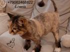 Смотреть изображение Услуги для животных Стрижка Кошек Спб Выезд на дом, 76701669 в Санкт-Петербурге