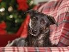 Уникальное изображение  Очень красивая ласковая собака 81140876 в Санкт-Петербурге