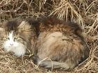 Скачать бесплатно изображение  Старенький котик ищет дом 82892637 в Санкт-Петербурге