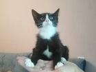 Просмотреть foto  Аккуратный котенок с розовым носиком 84186283 в Санкт-Петербурге
